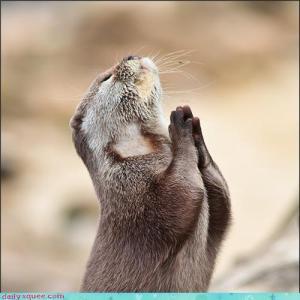 Otter doing Namaste