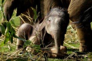 Britain Baby Elephant