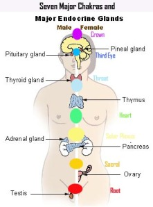 chakras and glands