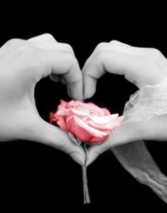 love. hands in the shape  of a heart holding a rose