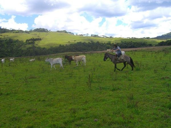 Anthony on horseback at ranch in brazil