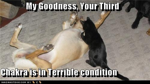 [Image: 508b8_funny-dog-pictures-my-goodness-you...dition.jpg]